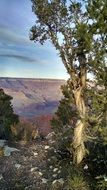 grand canyon tree view