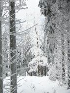 winter snow in the forest landscape