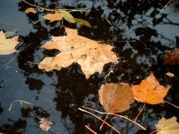 autumn leaves in water close-up