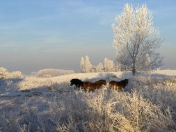 brown Horses in white Winter landscape with Snowy frosty trees
