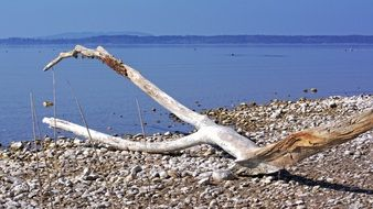 weathered drift wood on the chiemsee beach