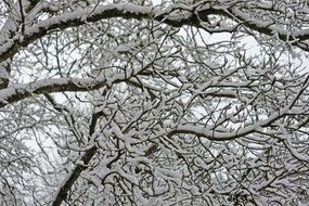 branches in deep snow close-up