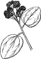 black and white graphic image of a flower with large leaves