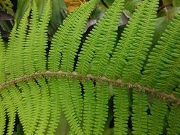 large green leaf of fern closeup