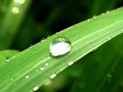 Water Drop on Green grass macro photo