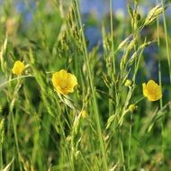 Meadow Grasses Nature Yellow