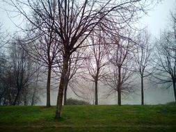 fog in the grove