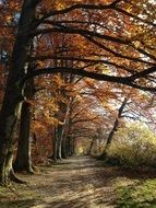 Forest path Autumn Nature view