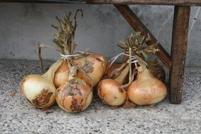 bunches of onions under the bench