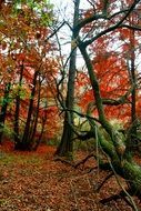 colorful Autumn Forest Red Leaves