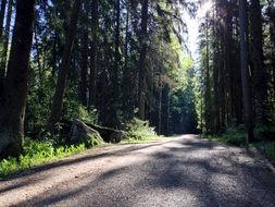 play of light and shadow on a forest road
