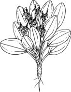 black and white graphic image of a wild plant as a bouquet