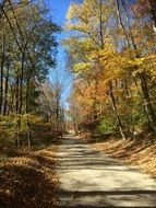 road in the autumn forest in new england