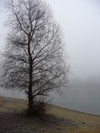 tree without leaves in the fog in winter