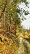 autumn Forest Way panorama in poland