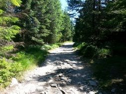 wide trail in the green forest in the Tatras