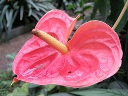 pink flower with an oblong core