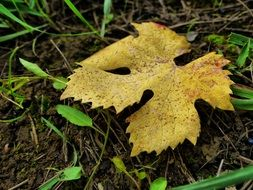 dry autumn leaf on the ground closeup