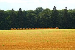 distant view of an even row of straw bales on a field