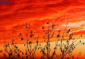 silhouettes of plants on a background of red sky