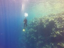 Diver Drop-Off in Ocean at coral reef, Palau