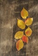 colorful autumn leaves on a wooden surface close-up