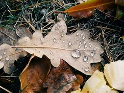 autumn leaves in drops of water on grass close-up