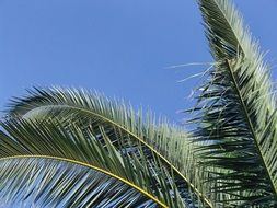 green palm Tree Blue sky view