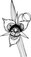 black-white graphic image of a wild flower with an oblong leaf