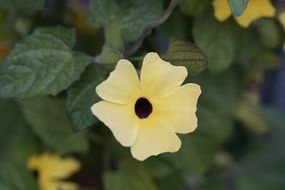 Brown Eyed Susanne