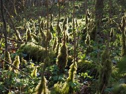 green mossy forest floor