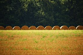 row of round bales of straw on the field