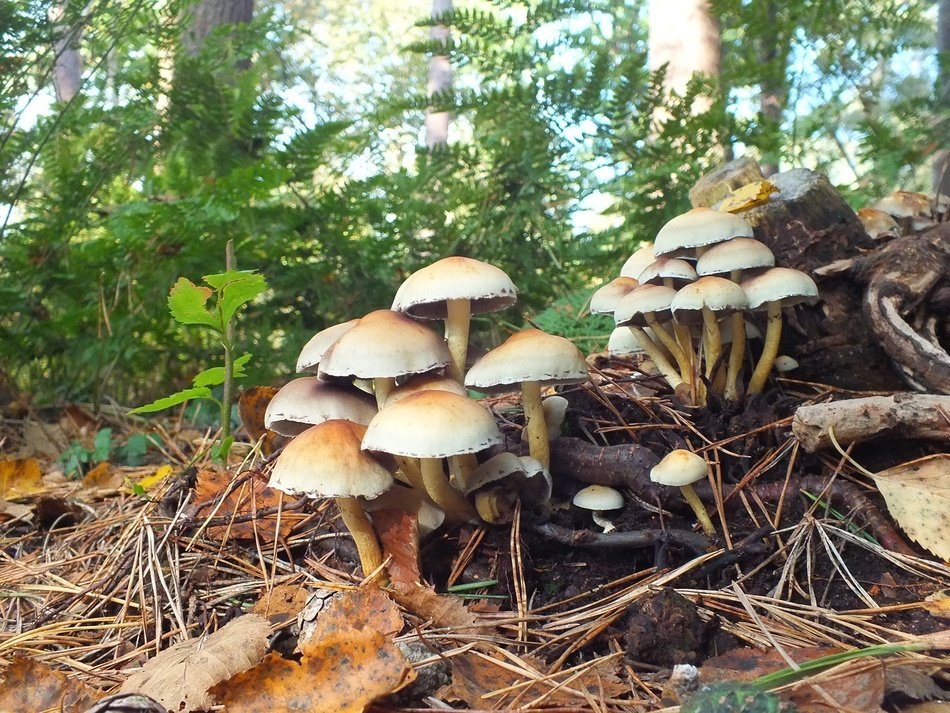 mushrooms in autumn forest nature view