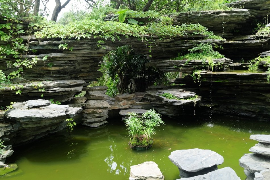 beautiful pond with tropical plants on stones, China, Shenzhen International Garden and Flower Expo Park