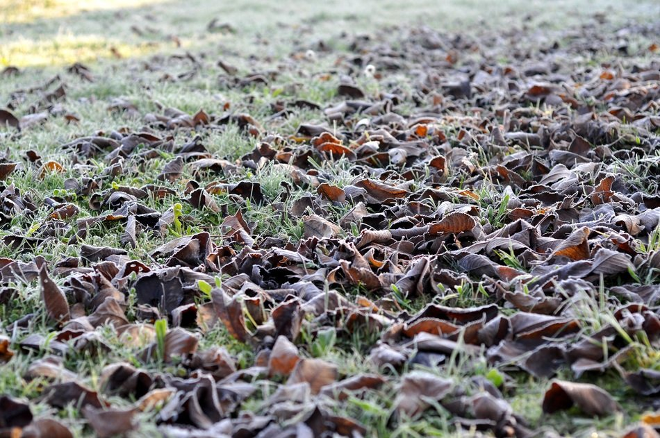 autumn foliage on grass in frost closeup