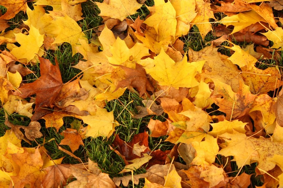 colorful yellow autumn foliage on green grass close-up