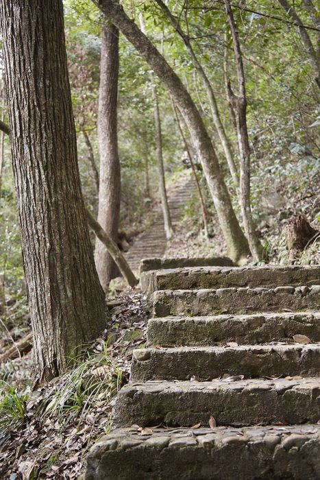 landscape of stone stairs like a path in the forest