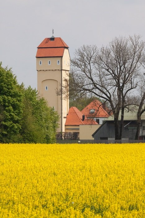 water tower and yellow oilseed rape field