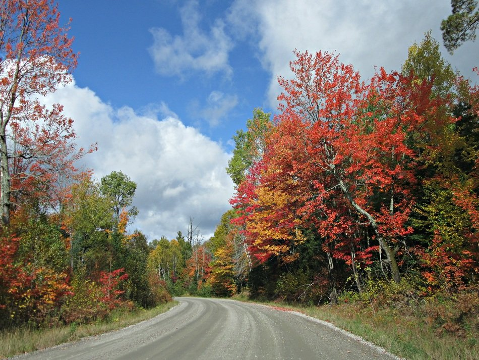 multi-colored trees along a country road