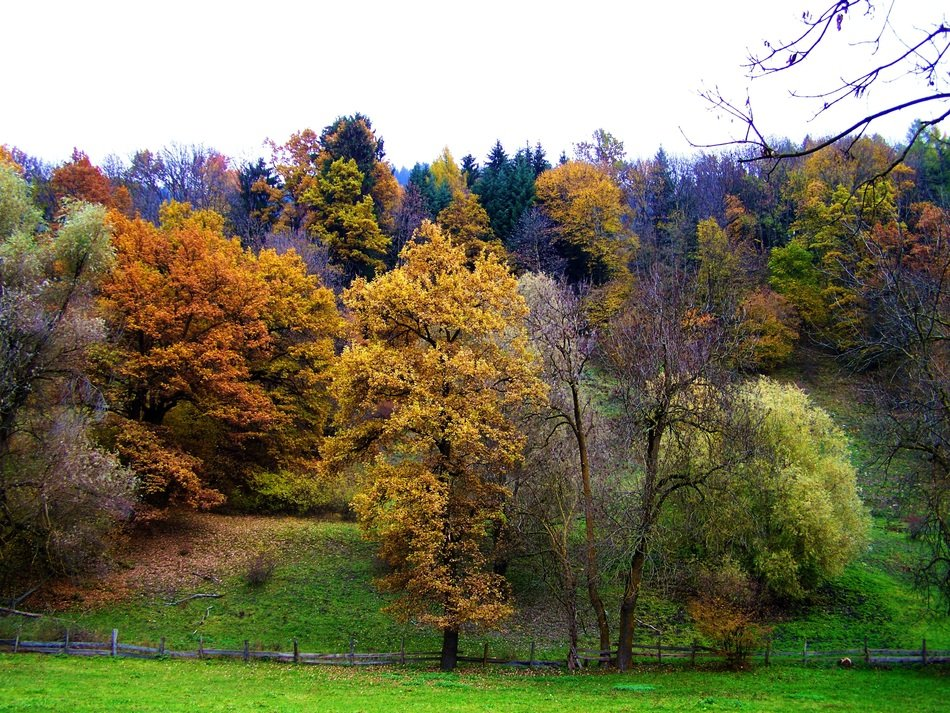 Landscape of autumn colorful forest