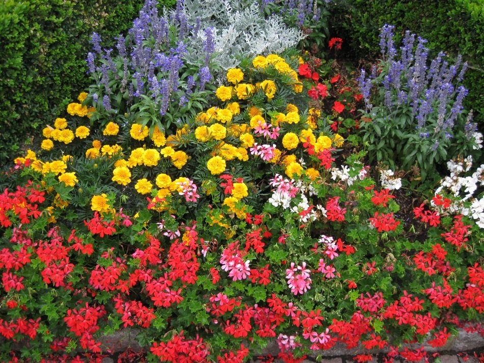 colorful flowers garden