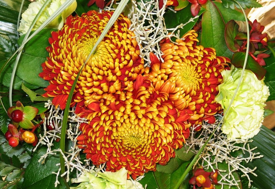 bouquet of red-orange chrysanthemums