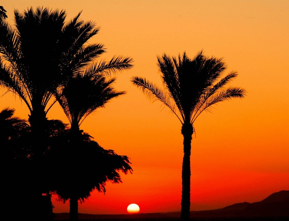 dark silhouettes of palm trees and bright sun at red sky, Egypt