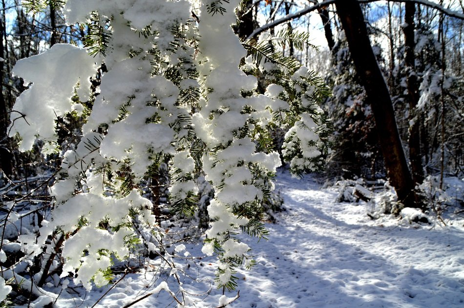 Snow on a tree in a forest