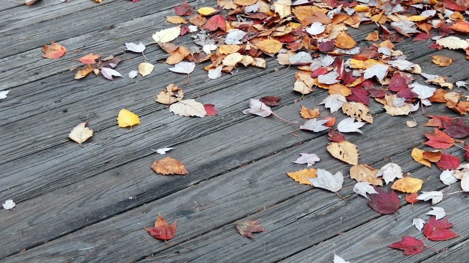 dry autumn foliage on a wooden surface