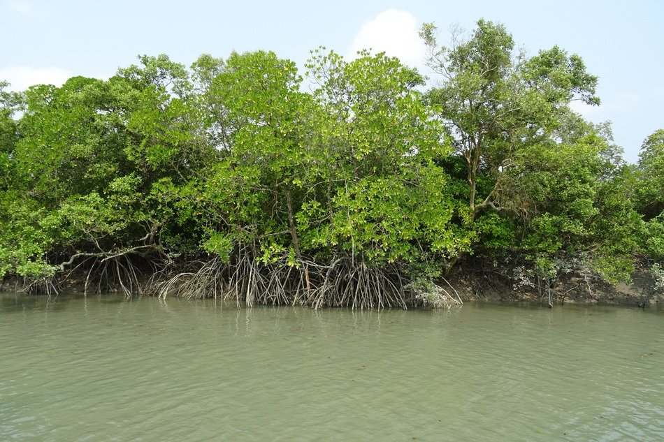 Sundarbans Forest in India