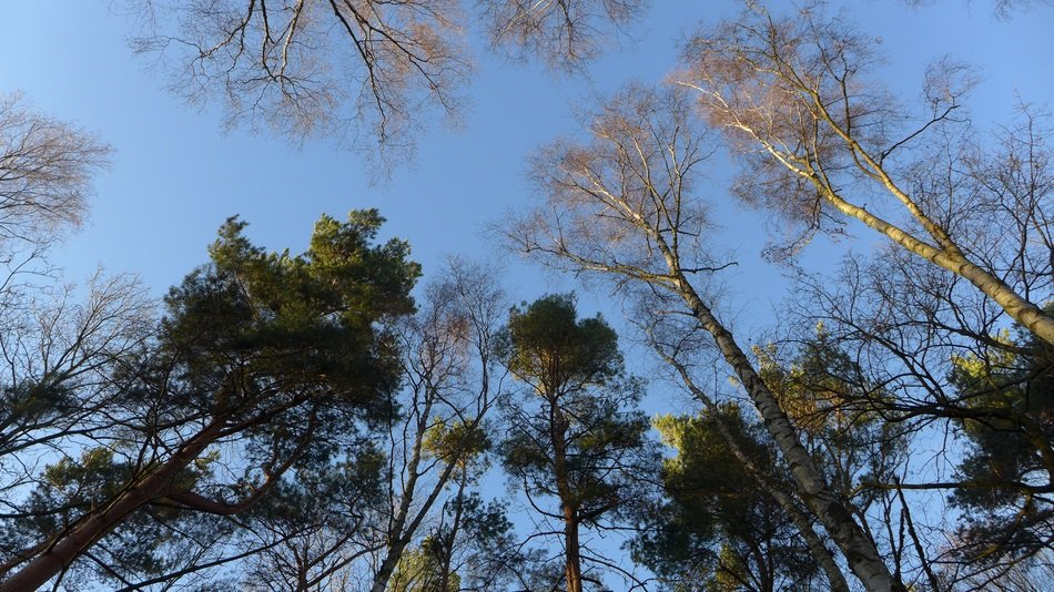forest trees under blue sky