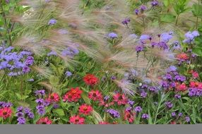 colorful multicolored flowers in the garden in the meadow