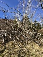 Dead bared Tree Dry desert view