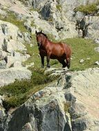 brown horse on the slope of the Pyrenees